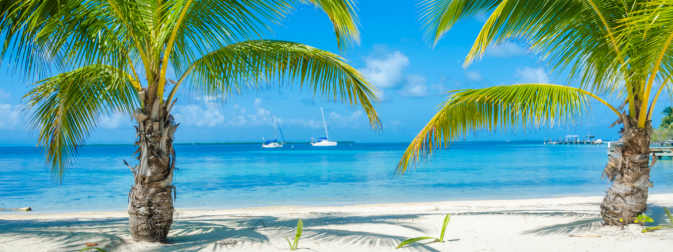 Belize_beach_plamtrees_OB_newsletter image